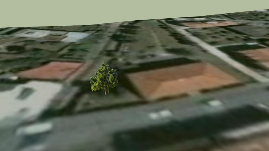 albero a1