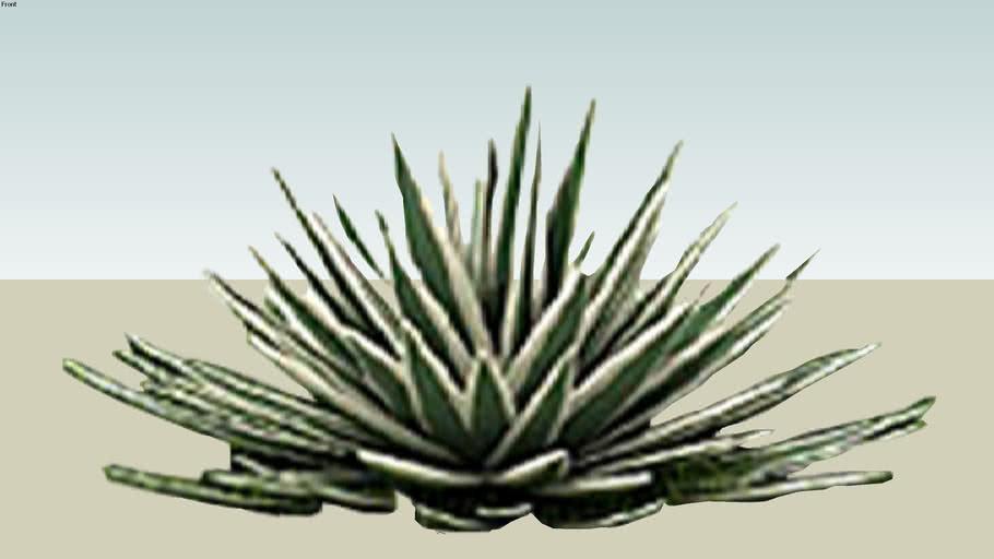 plant 2d