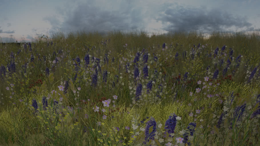 Meadow's wild flowers and grasses