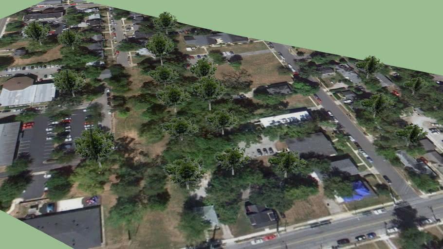 Trees near Woodland Ave Lex Ky