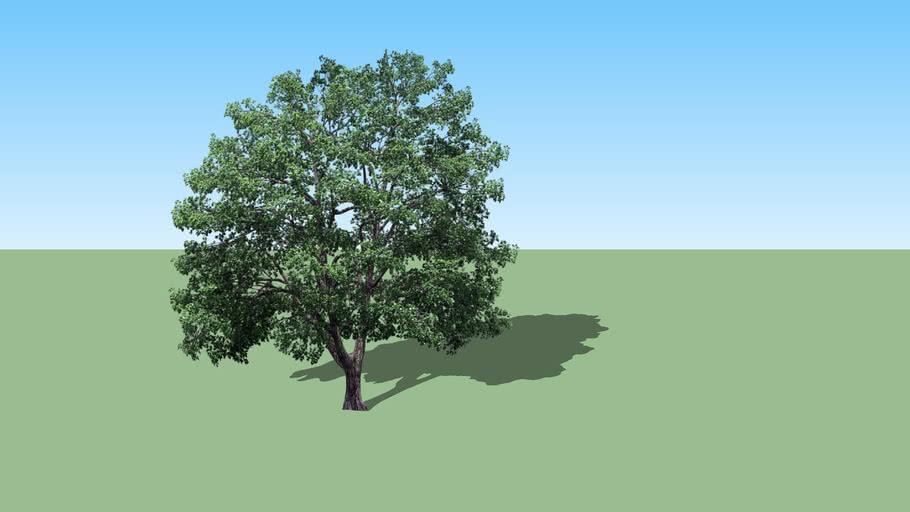 2d tree 09