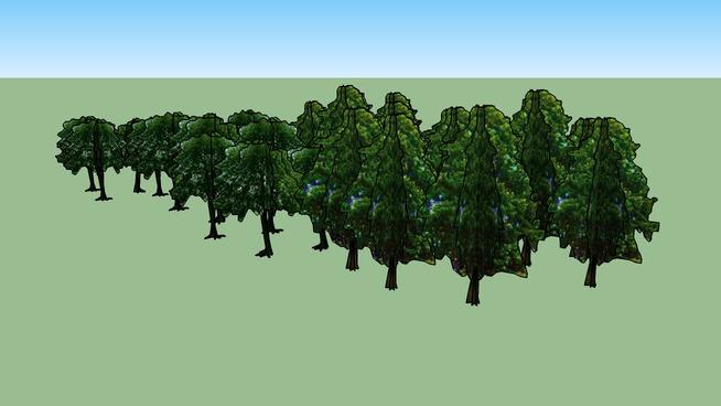 Drzewa Olsztyn 95