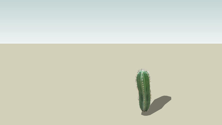 Tall Green Cactus, Lemaireocereus Chichipe