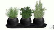 Pflanzen & Blumen inkl. Vasen