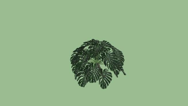 Vegetação - Costela de Adão