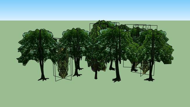 Drzewa Olsztyn 118