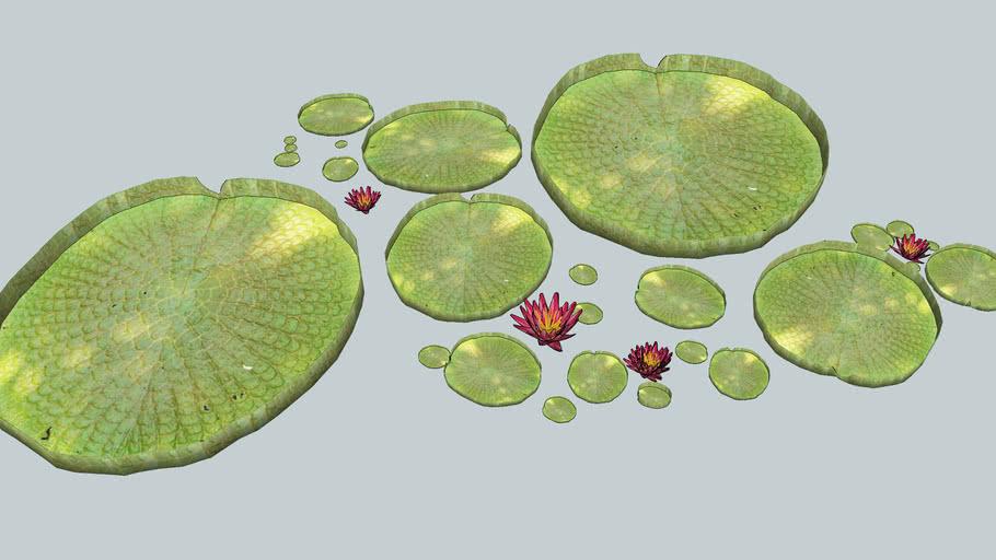 3D,nénuphar, plante, aquatique, jardin, fleur,eau,
