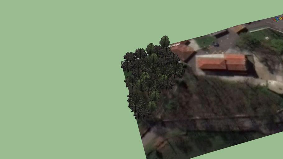 Arboles del entorno Santuario de la Virgen de el Carbayu