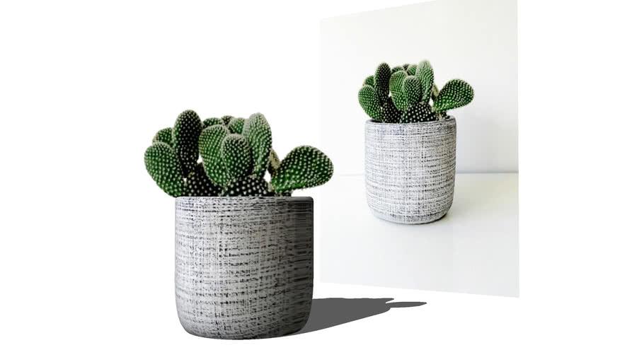 Cactus mini vase