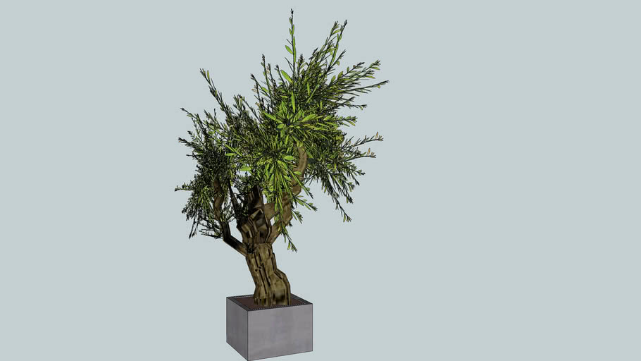 3D olivier  Olive tree (frederic tabary)