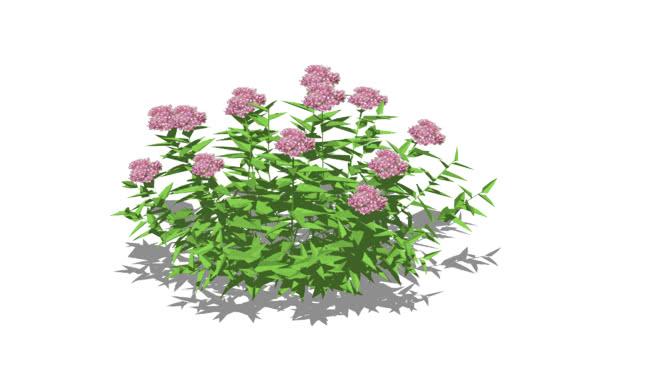 ZZZ Rośliny zewnętrzne