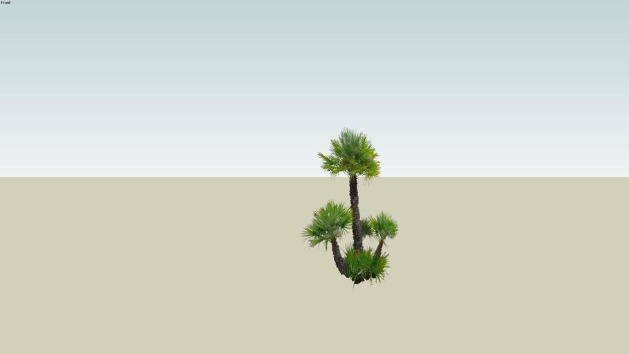 palmier massif bilborde vegetration