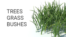 Trees grass bushes