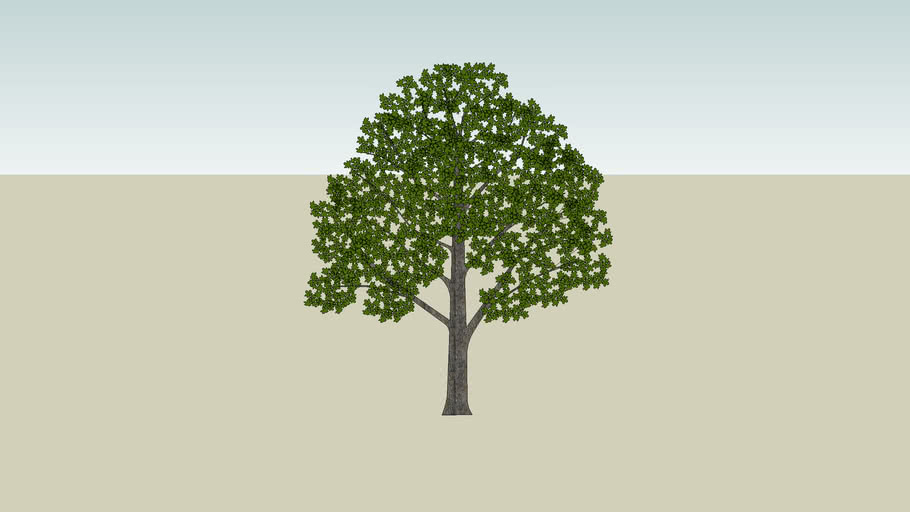 2D Maple Tree