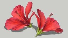 plant/flower