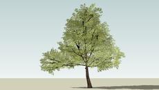 arbori si arbusti