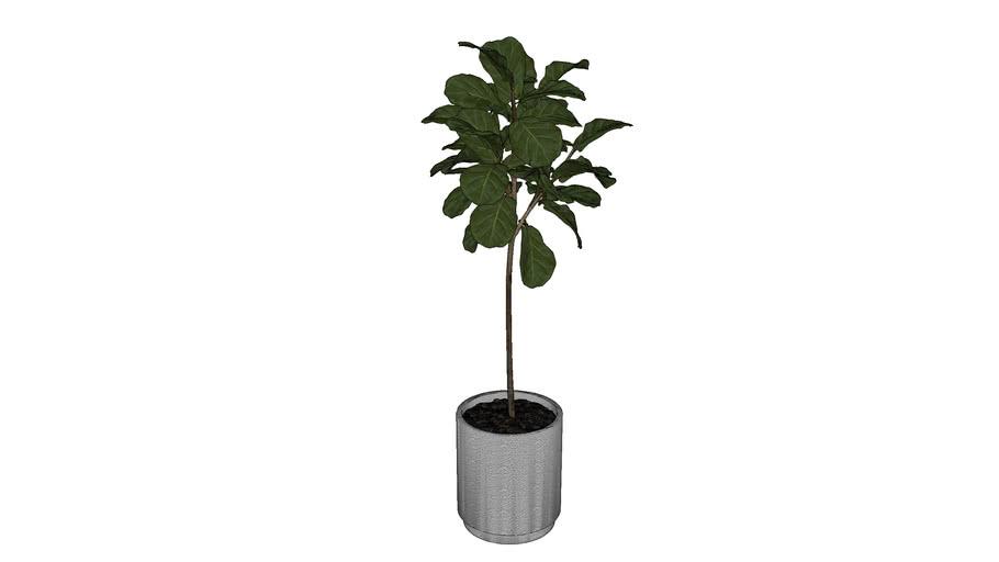 Planta 05