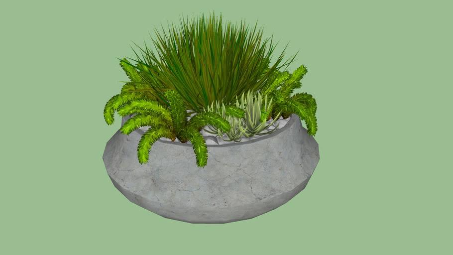 Bacia com plantas verdes