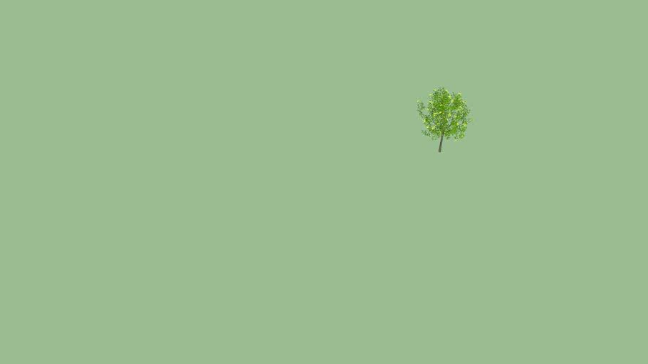 3d tree - yellow&green tree