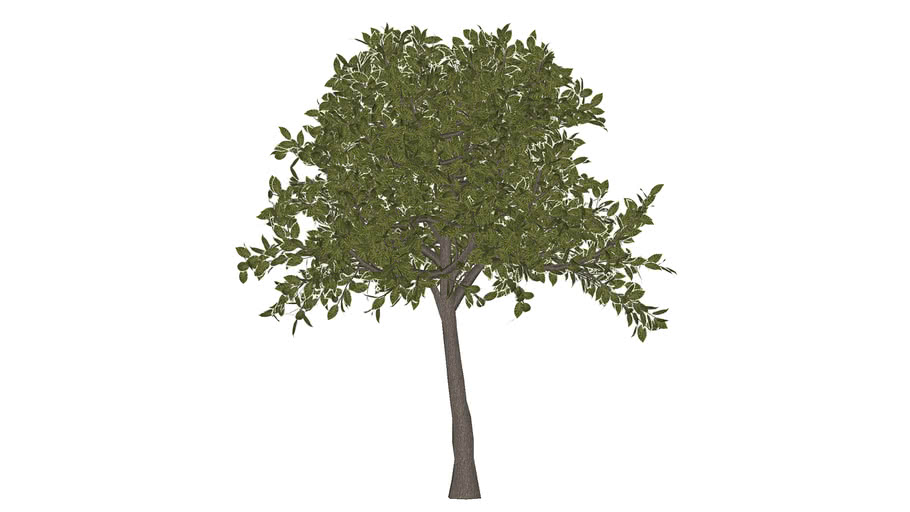 Artificial Live Oak Tree - 3D