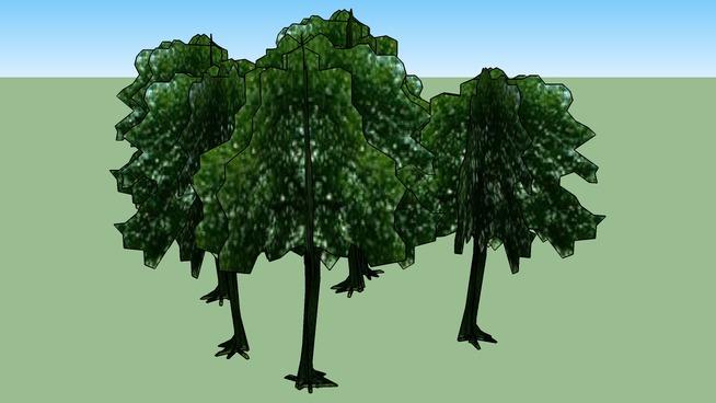 Drzewa Olsztyn 149