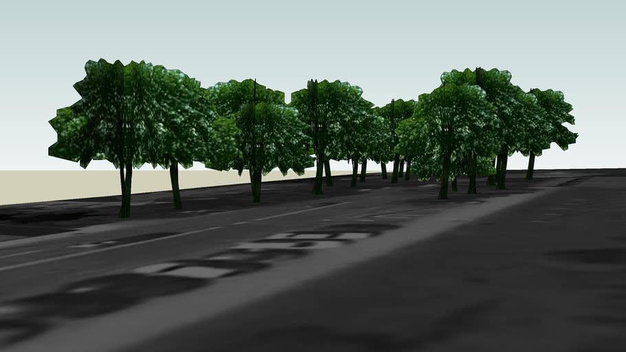 Drzewa Olsztyn 132