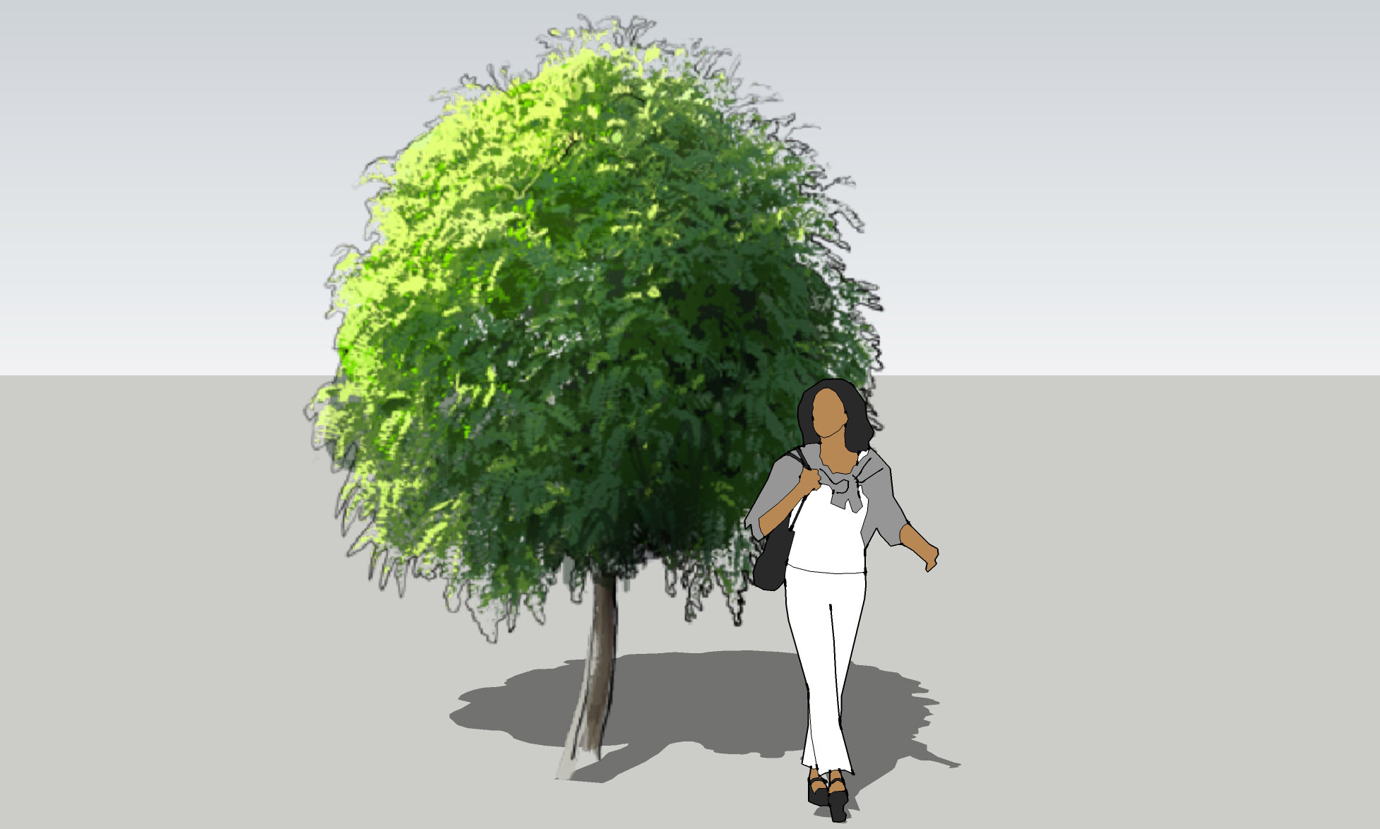 Лиственные деревья / Deciduous trees