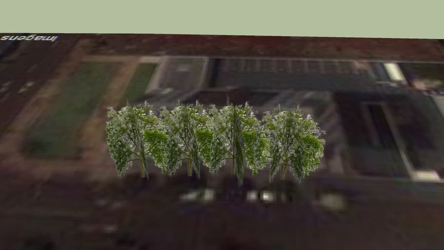 Arvores pequenas
