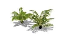 vegetationn