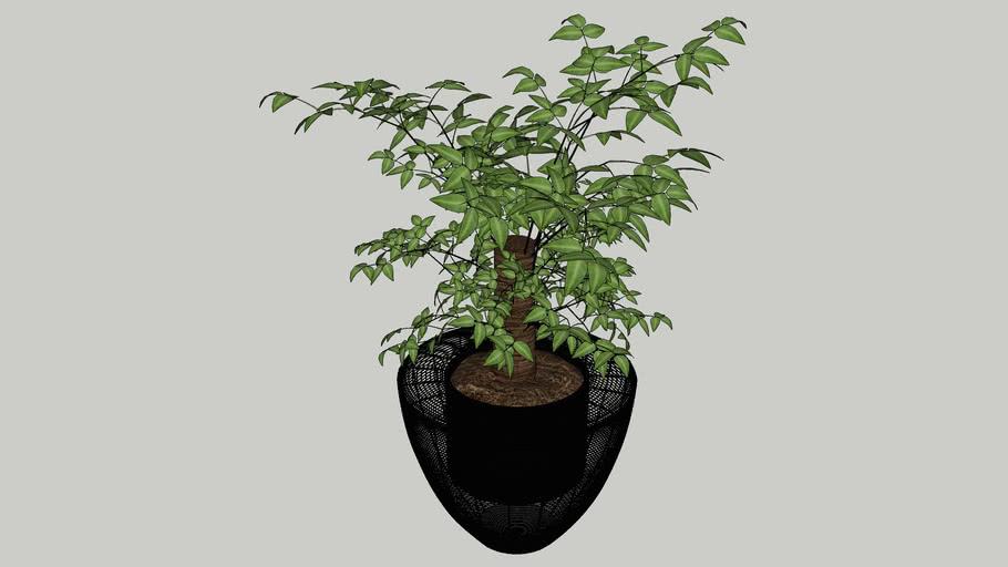 Planter (04)
