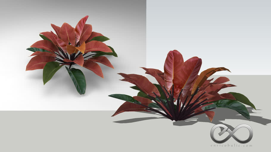 """Philodendron """"Imperial Red"""""""