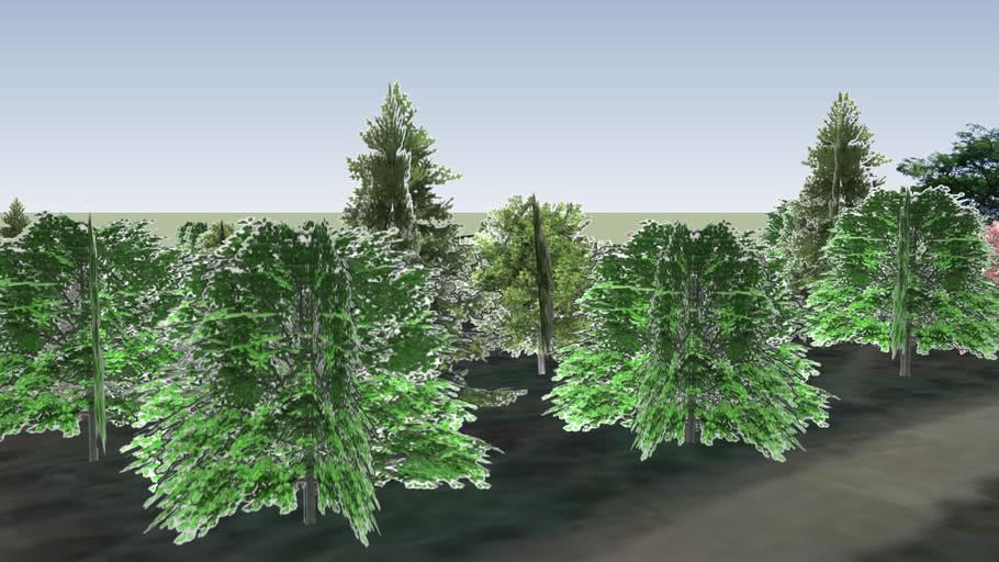 初阳周边树木TREES AROUND THE CHUYANG'S IN ZHEJIANG NORMAL UNIVERSITY