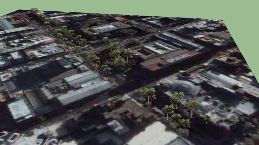 Árboles en Av 7, La Plata