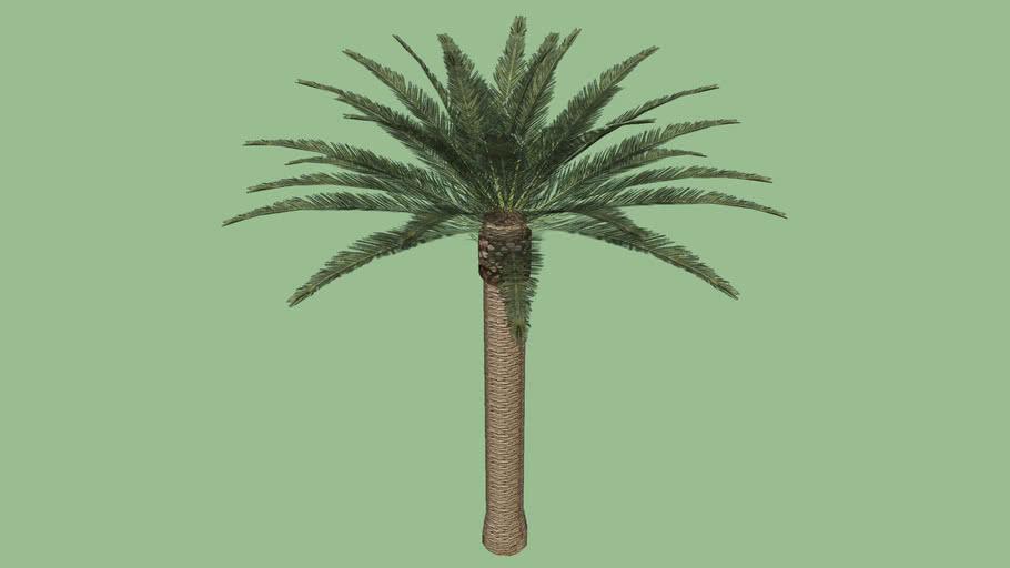 Palmier/palm