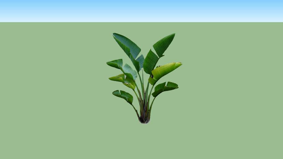 Heliconia atau bunga pisang-pisangan