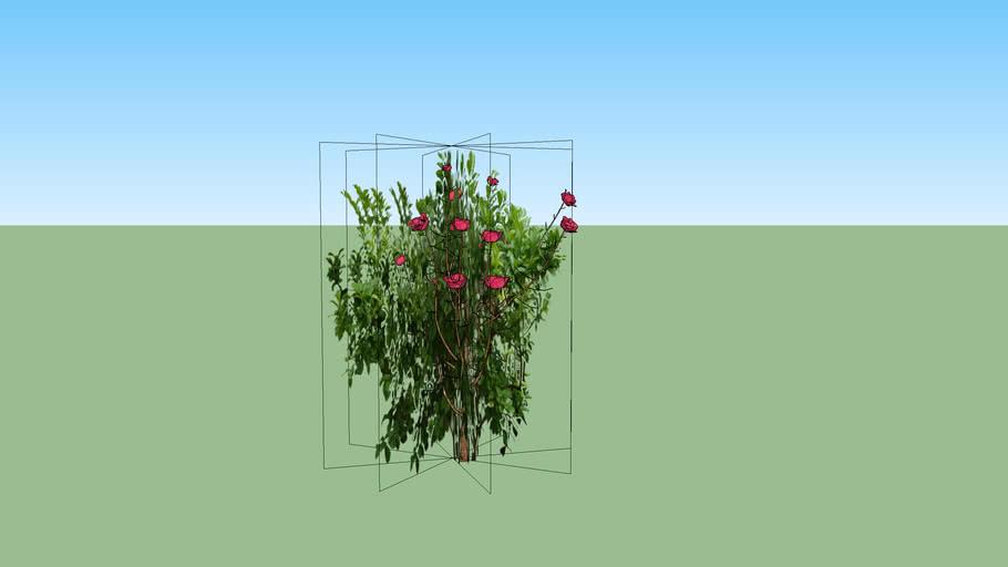 rose bush sorta