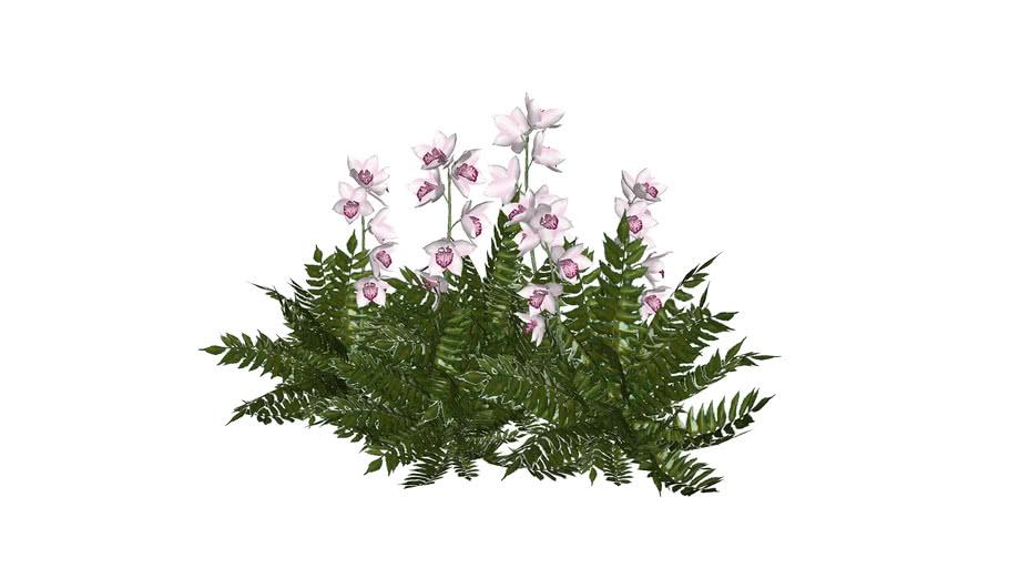 Cay hoa