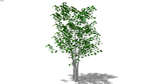Trees 3D Low Poly
