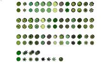 2D Plants