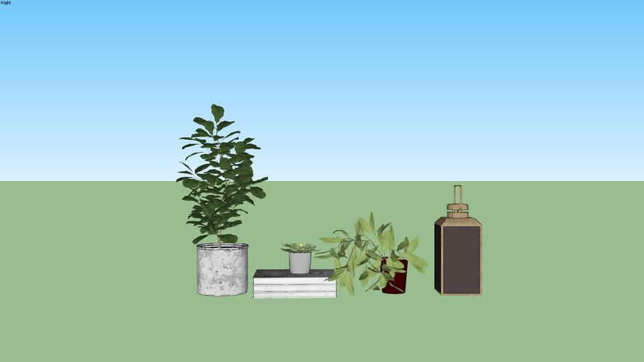 PLANT - CÂY - DECOR