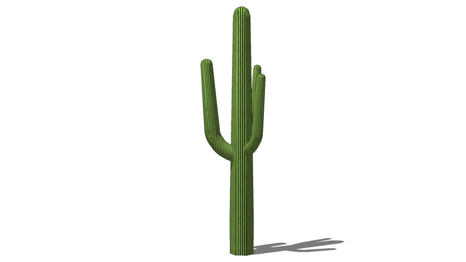 Mature desert saguaro tree1