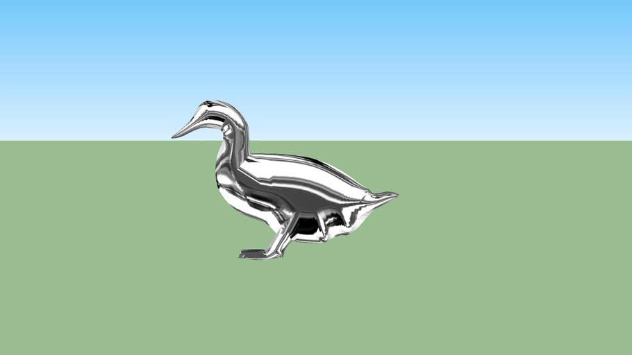 canard - duck