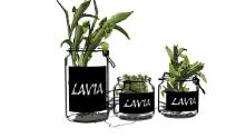 植物 / Plant