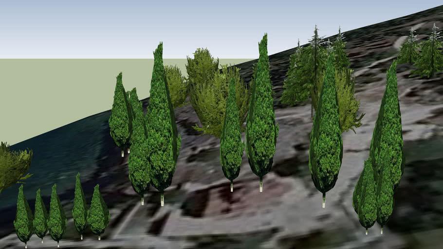 Дървета-Св.Йоан Канео