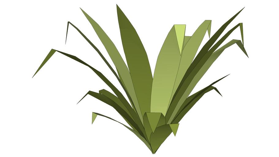 Non-flowering plant