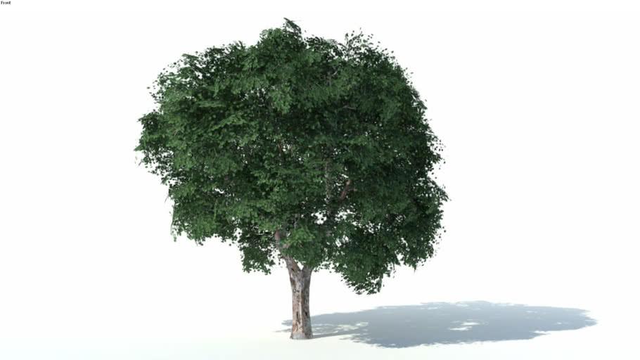 Low poly 3d tree (002)
