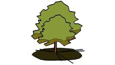 Trees 2D