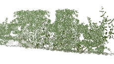 Oak + Olive