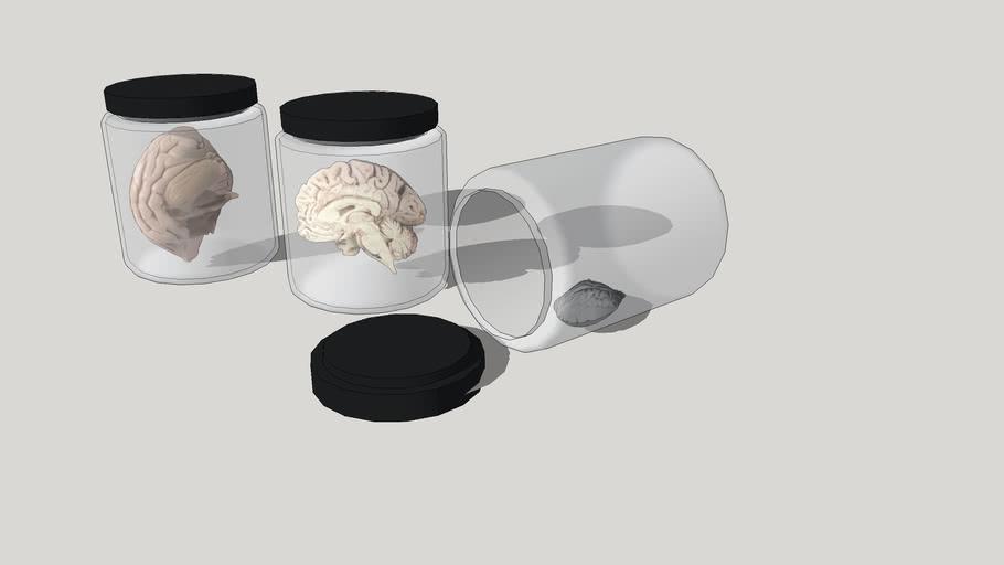 brain , мозги