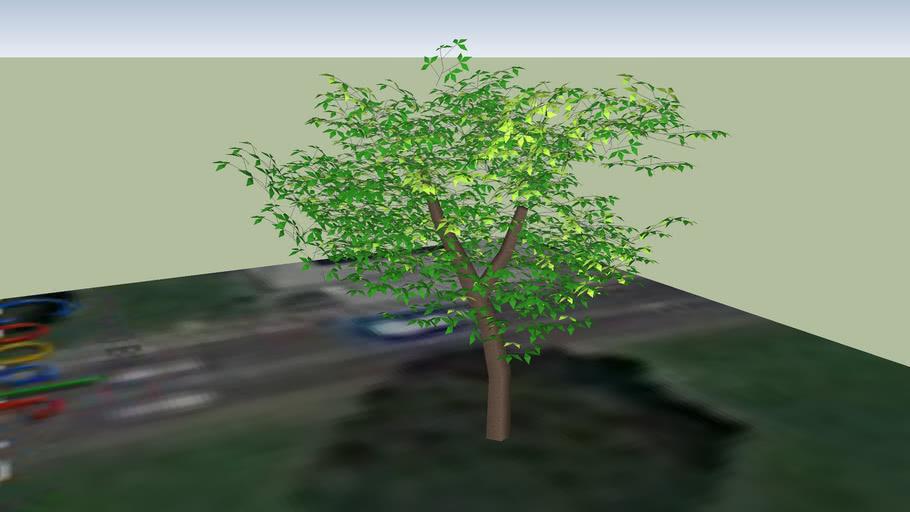 tree at the Goleta Valley Cottage Hospital helipad